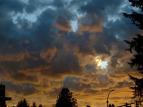 blue sunset evening crows goldensunset beautifulsunset eveningclouds blueclouds goldenclouds crowshoming crowsheadinghome