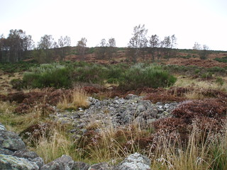 P25 Possible old cairn at dyked field