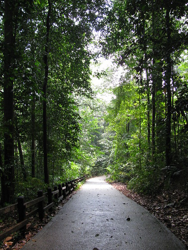 Bukit Timah Nature Reserve | by holidaypointau