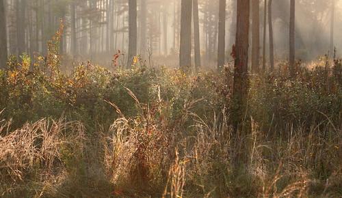 morning lana nature weather fog forest sunrise catchycolors landscape woods louisiana award rays win crepuscular awardwinning gramlich abitasprings tnc thenatureconservancy 2ndplace canoneos5d sttammanyparish fantasticnature abitacreekflatwoodspreserve dragondaggerphoto lanagramlich oct252012