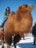 Velbloudí závody v Ulánbátaru, foto: Martin Vorel