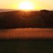 American Farmscapes-2012