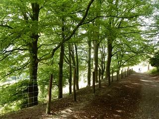 Treelined