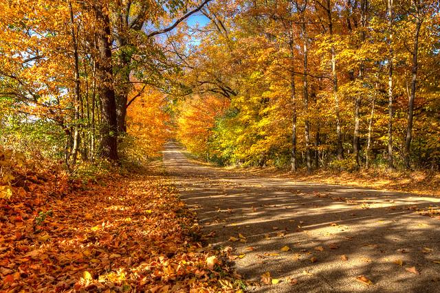 Fallen Leaves Along The Road