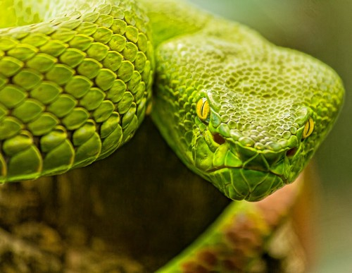 Snake | by Kool Cats Photography over 12 Million Views