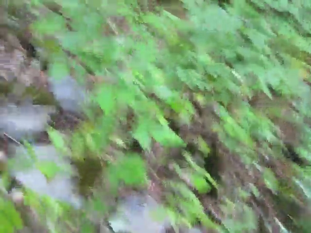 024 Video of Bushwhacking Up Rusk Mountain