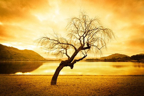 lake wanaka trey ratcliff stuckincustoms treyratcliff waneka stuckincustomscom newzealandmtree