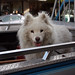 Dog in a Pickup by entheos_fog