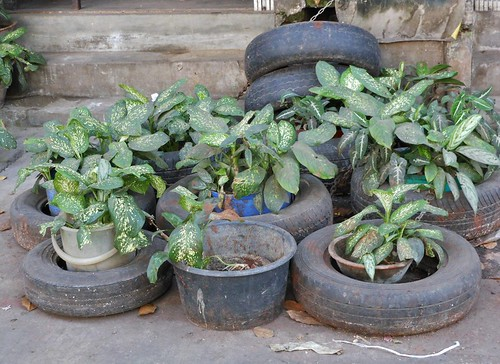 Tyres with Plants   by mikecogh