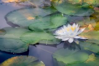 夏霞の池   by hiroching