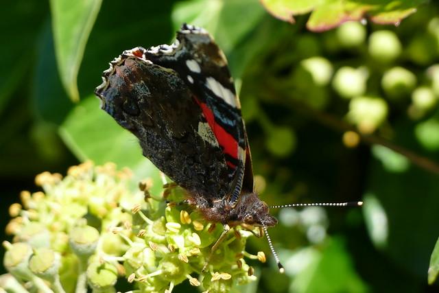 10.03.16.Butterflies