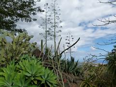 di, 11/09/2012 - 13:38 - 088. Bomen en planten in Conservatoire de Botanique Mascarin
