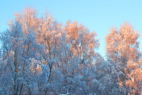 trees winter snow sunrise norfolk heath norwich mousehold