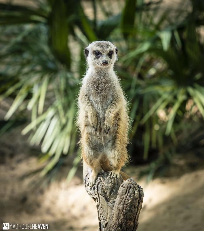 Barcelona Zoo - 0185