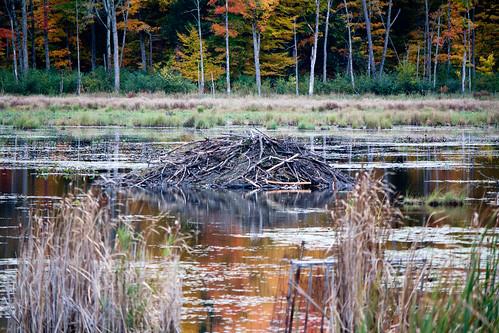 Beaver Hut | by tubafil
