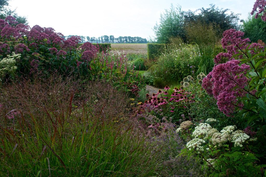 Garden View | In The Garden Of Nursery U0027In Goede Aarde ...