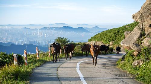 canon landscape hongkong taimoshan 5dmarkiii