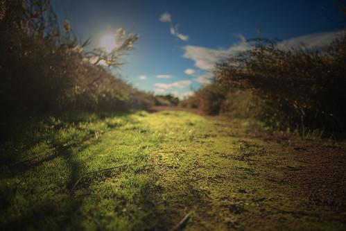 light verde green grass contraluz bokeh hierba sanfelipedeneri canon5dmarkii parquenaturaldeelhondo zeissdistagon25mmf2ze