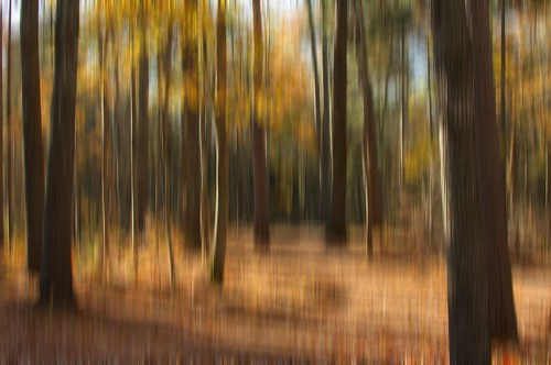 autumn blur fall nova forest photoshop 35mm duck pond woods nikon ns kingston motionblur valley elements annapolis scotia nikkor 35 pse d90 18g pse6 stronachpark