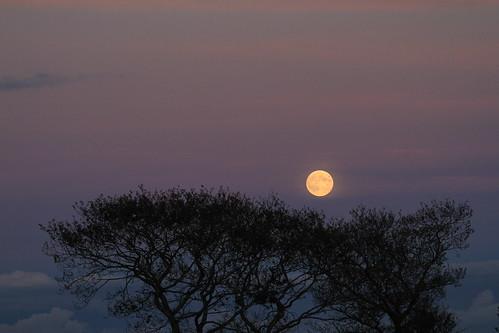trees ireland winter moon halloween night dusk moonlight wicklow easternsky twop supershot rathdrum bej mywinners platinumphoto citrit ballygannon artofimages