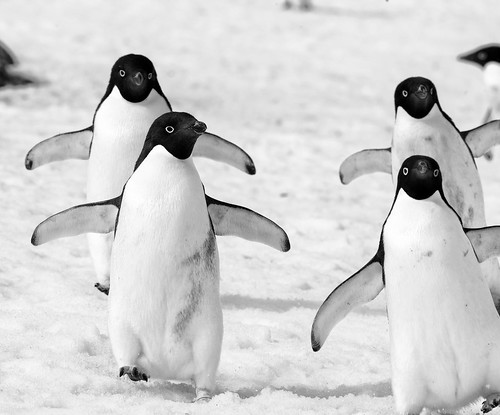 Antarctica 2013: Journey to the Crystal Desert