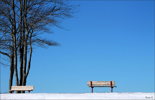 blue trees winter snow tree bench bluesky benches
