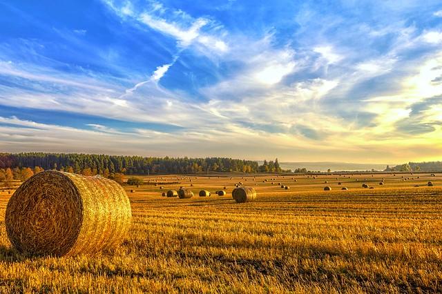 Halcyon Harvest Days