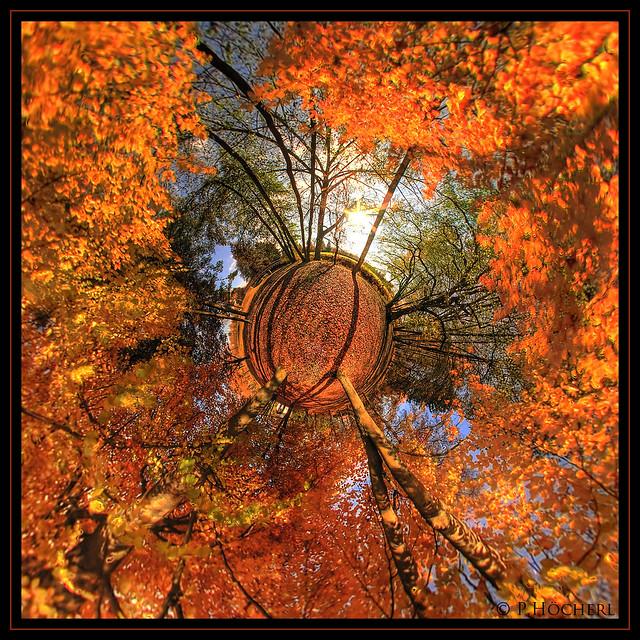 Weiden Herbst am Turnerweg - Little Planet