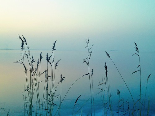 Winter | by Amourins