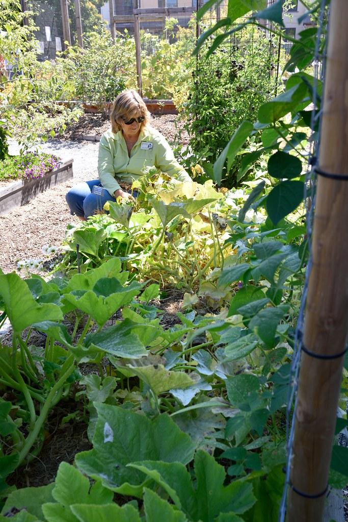 Dsc 7768 sm master gardeners of santa clara county flickr - Master gardeners santa clara county ...