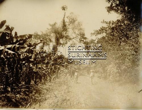 Op de plantage   by Stichting Surinaams Museum