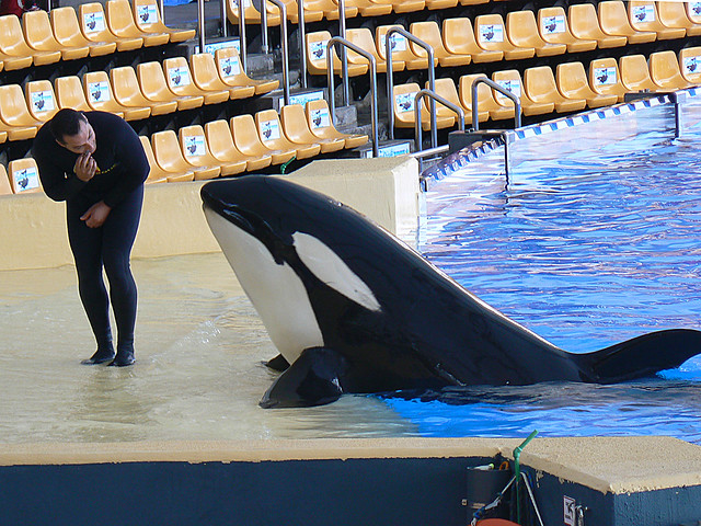 Orca and Trainer (1)