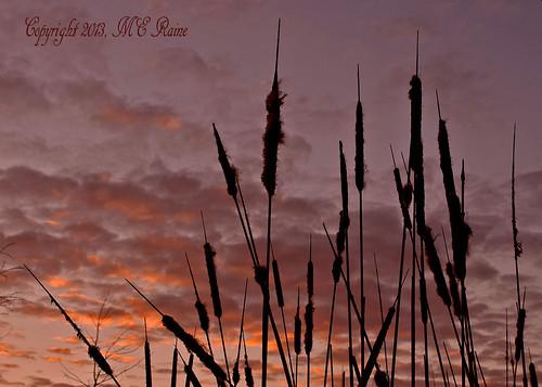 "sunset sky silhouette clouds dusk cattails wildflowers sanctuary naturepreserve ""nature"" dukefarms nj"" ""hillsborough"