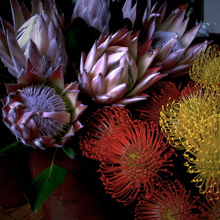 Fiori Esotici.Exotic Flowers Fiori Esotici Giorgio Ghezzi Flickr