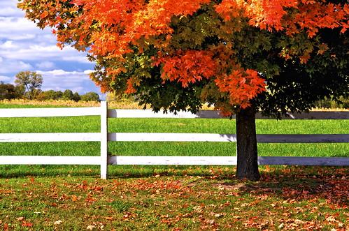 horses bw fallleaves fall clouds fallcolors fences autumncolors blueskies polarizer fallenleaves mapletrees southernmaryland autumndays nikond300 lothianmaryland annearundelcountymaryland marylandhorsefarms autumnscenics mygearandme 1555nikkor28 lothianhorsefarms annearundelcountyhorsefarms