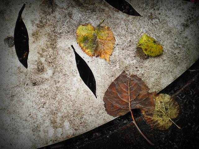 Leaves On Leaves