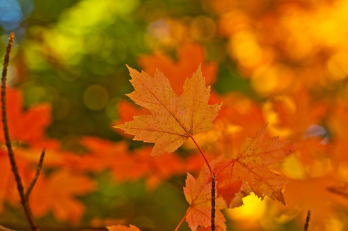 "autumn toronto canada nikon fallcolors beaches mapleleaves tamron90mm kewgarden torontobeaches nikond90 flickraward ""flickraward5"" TGAM:photodesk=nature2012"