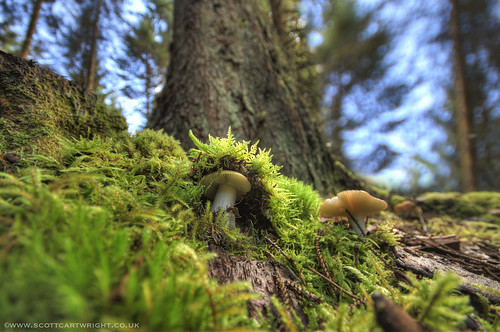 Hiding Mushroom HDR