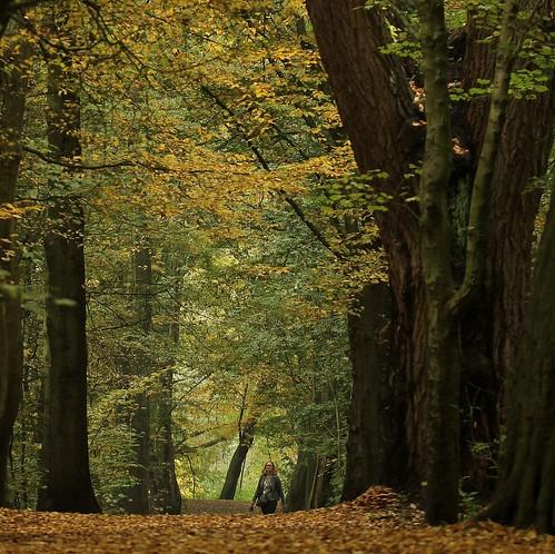 autumn netherlands leaves square rotterdam colours herfst bos intothewoods kleuren bladeren vierkant kralingsebos