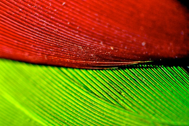 Parrot Feather Red Green