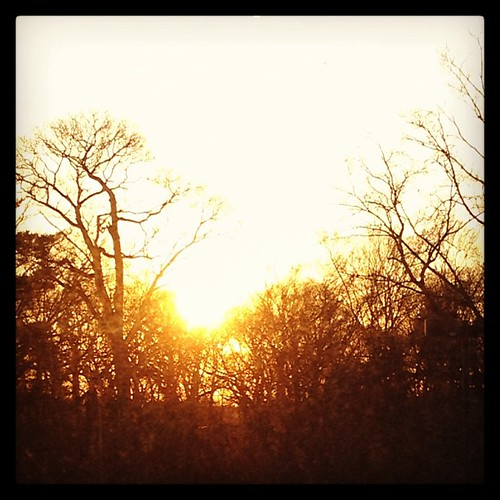 trees sunset sun window work square landscape scenery bright squareformat photoaday hefe 365project iphoneography instagramapp uploaded:by=instagram