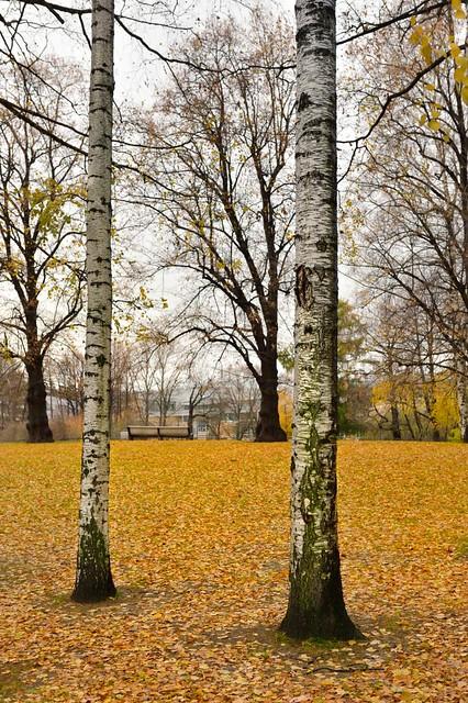 Un banco entre los árboles
