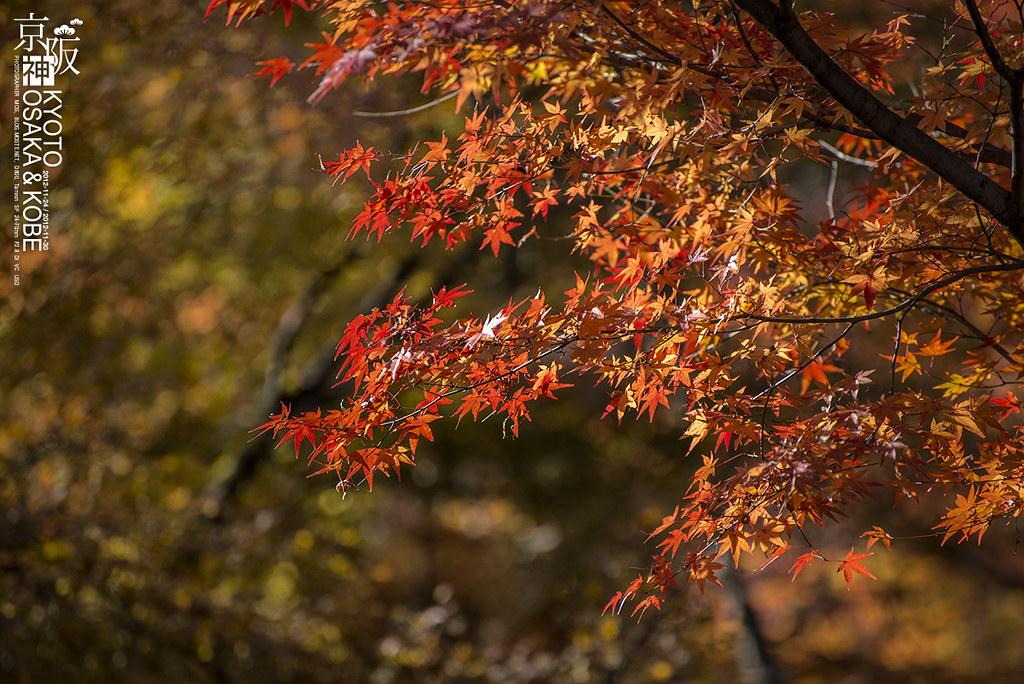 2012-11  Kyoto & Osaka & Kobe  | 2012-11-24 / 2012-11-30, Ja