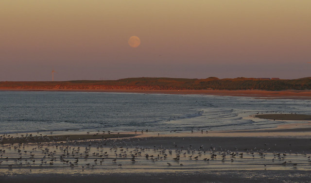 55 of 100 - Full Moon and Sunset