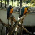 Papageienpaar im Louisenpark