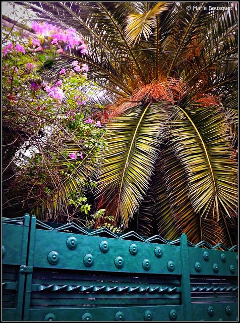 Palmier et massif fleuri derrière un portail vert