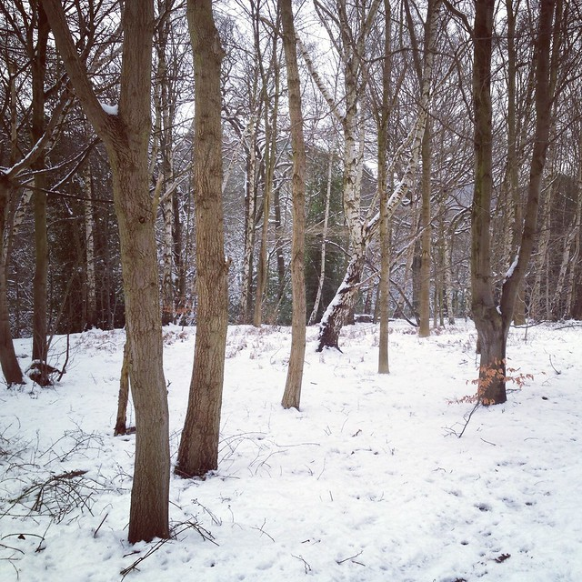 Roundhay Forest