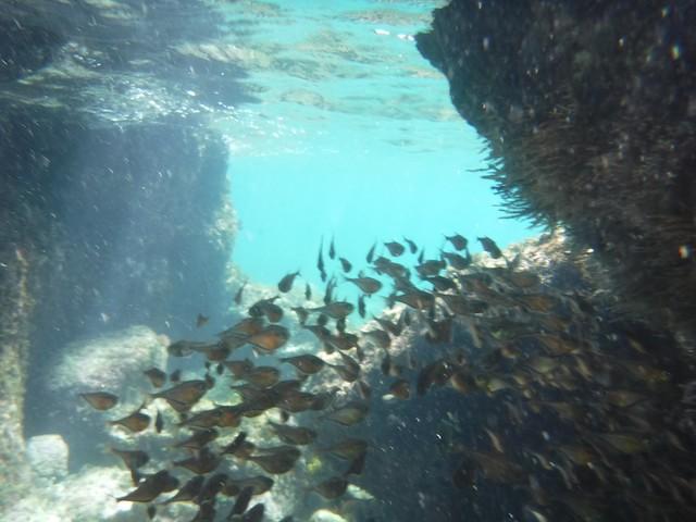 水, 2016-07-13 10:45 - 魚の群れ
