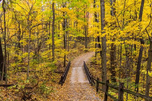 ohio fall colors landscape unitedstates lewiscenter highbanksmetropark kingsleyswamidoss
