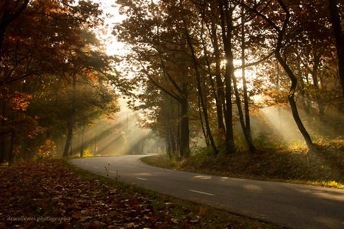 road sunlight path overijssel raysoflight ommen junne